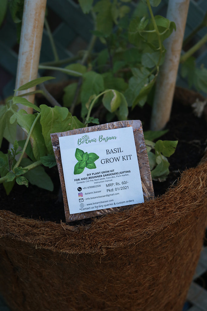 DIY GROW KIT BASIL SMALL