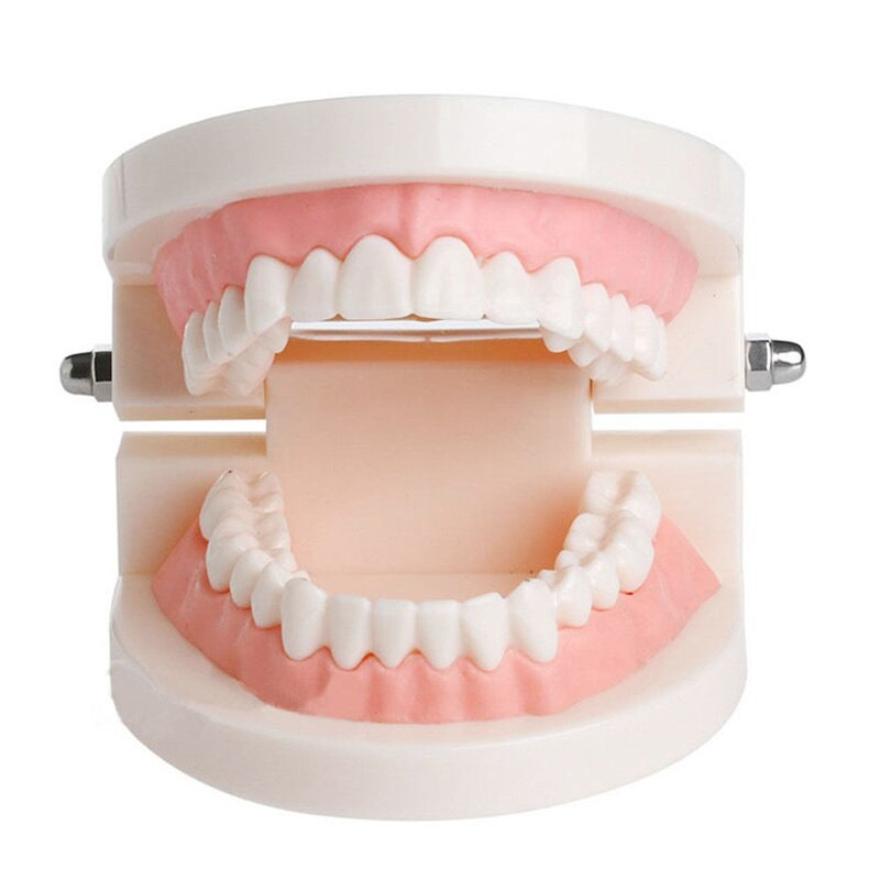 1pcs Dental Model teeth implant Restoration Bridge Teaching Study Tooth Medical Science Disease Study Dentist Dentistry products