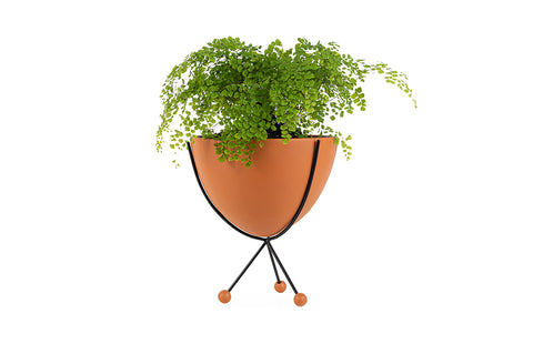 Glee Planter, Medium