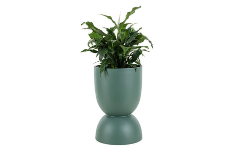 Joy Planter, Large