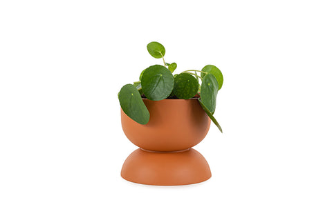 Joy Planter, Small
