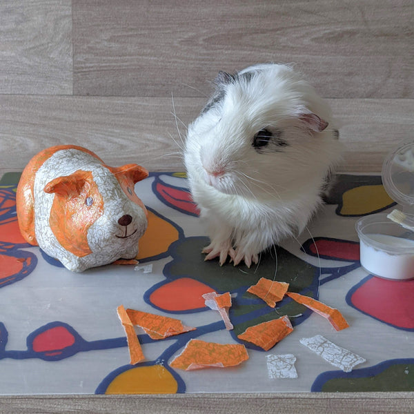 GUINEA PIG DECOPATCH KIT (GINGER & WHITE)
