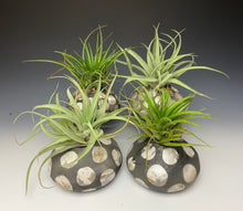 Load image into Gallery viewer, Spotted Raku AirPlant Vase