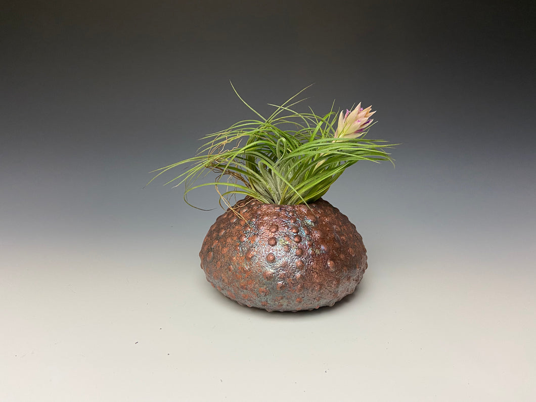 Rainbow Copper Raku Urchin AirPlant Vase