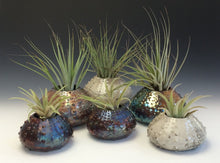 Load image into Gallery viewer, White Crackle Raku Urchin Air Plant Vase #2
