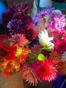 A Bag of Mixed Dahlia Tubers - Best Value!