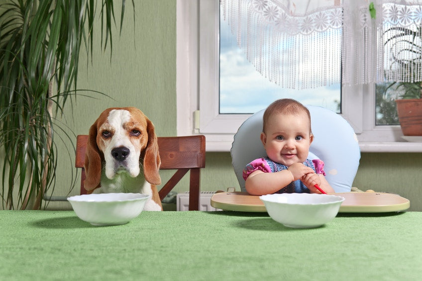 kid and dog sitting at dinner table waiting for food