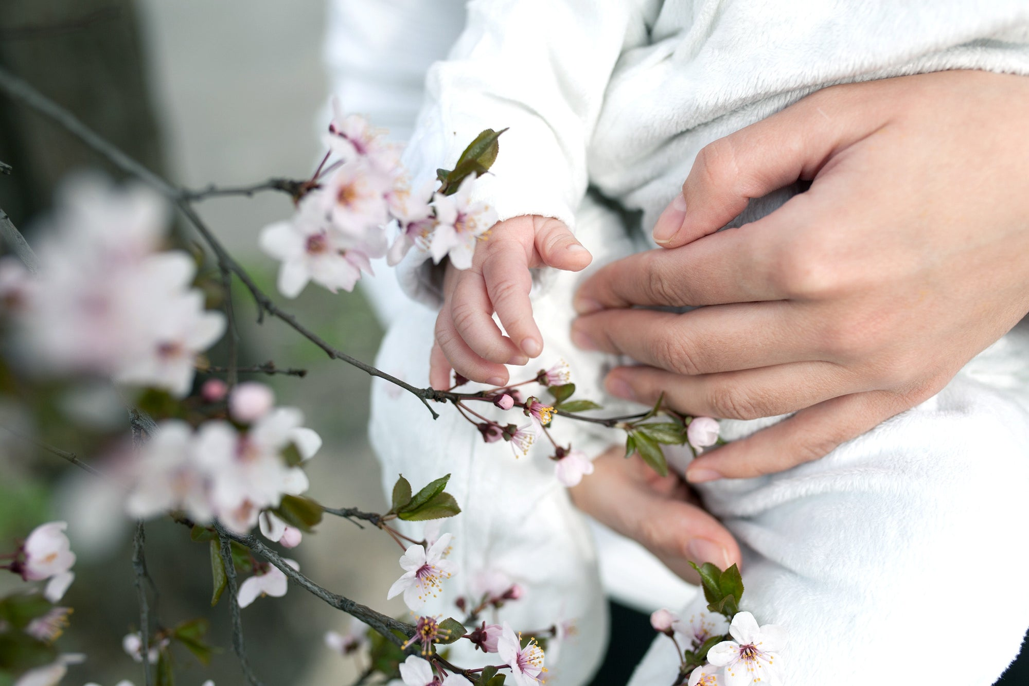 Baby touching flowers. children's hands closeup Mother hold child near cherry flowers
