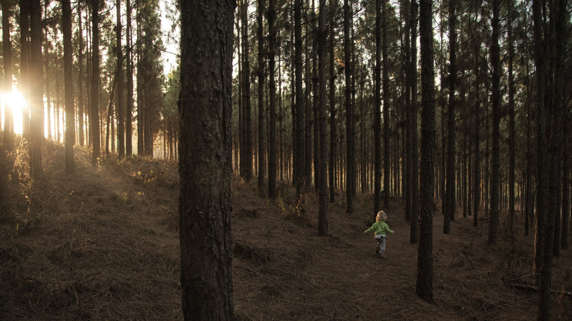Baby on a forest at evening