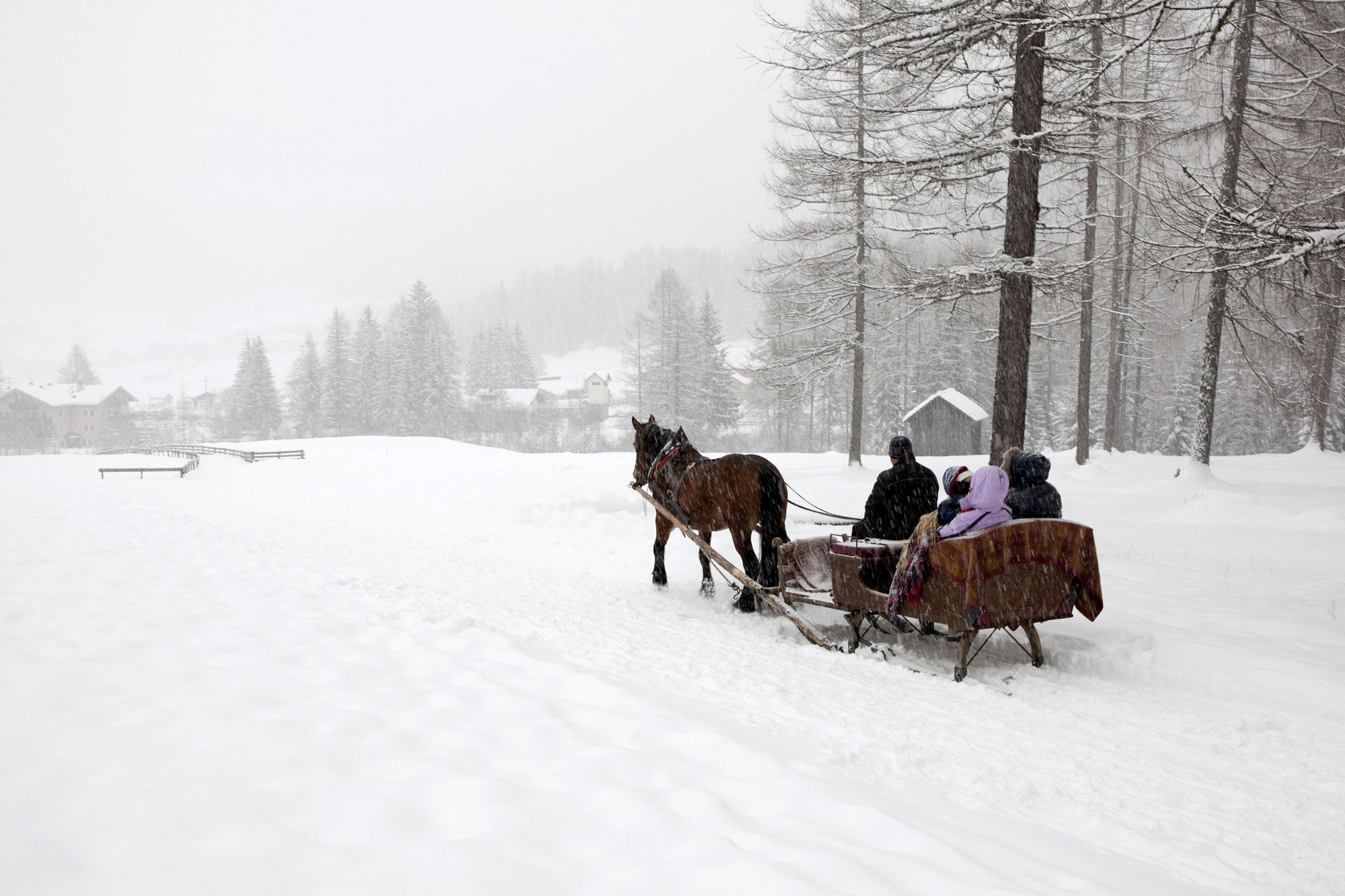sleigh ride with snow coming down