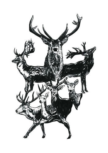 This piece features deer & stag studies hand drawn with a brush pen and inks.