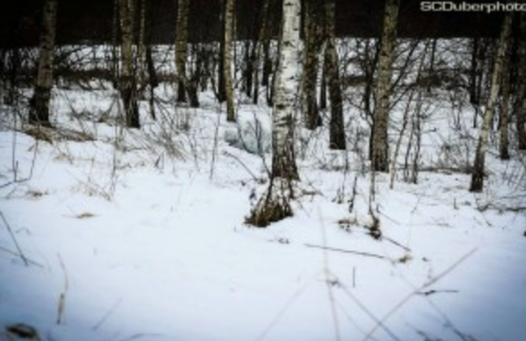 White snowy forest with a person blending in with his camo gear