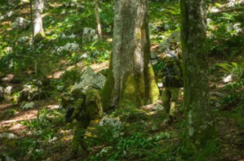 Lush green forest with someone wearing camo gear to blend in