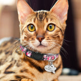 Cat Safety Necklace Free Engraved Fish ID Tag Nameplate-Cat collars-petsoftcare-Pink-18 to 29 cm-petsoftcare