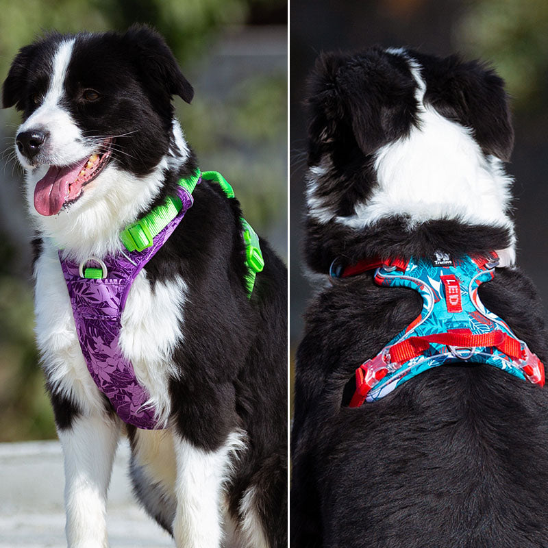 No Pull Dog Harness Vest Nylon Reflective-Collars, Harnesses & Leashes-petsoftcare-petsoftcare
