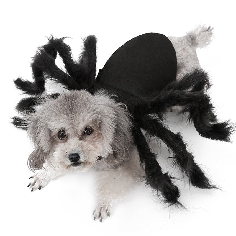 Halloween Pet Spider Clothes Simulation-Halloween shop-petsoftcare-petsoftcare