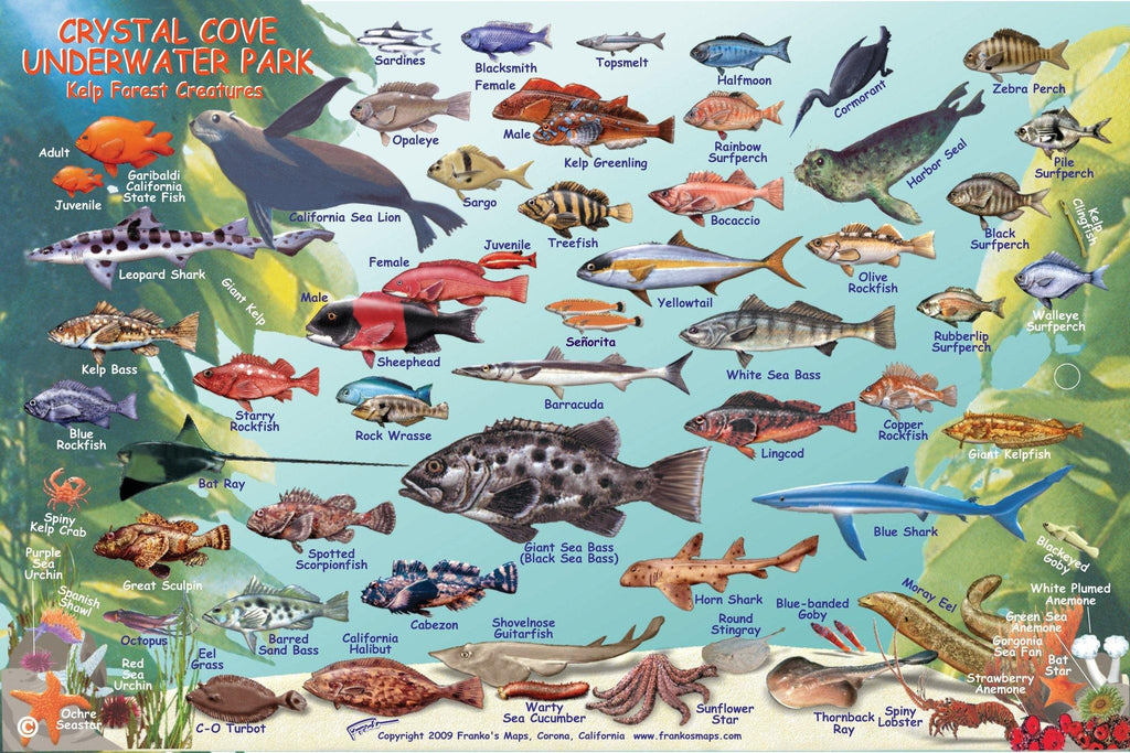 Crystal Cove Underwater Park Fish Card - Frankos Maps