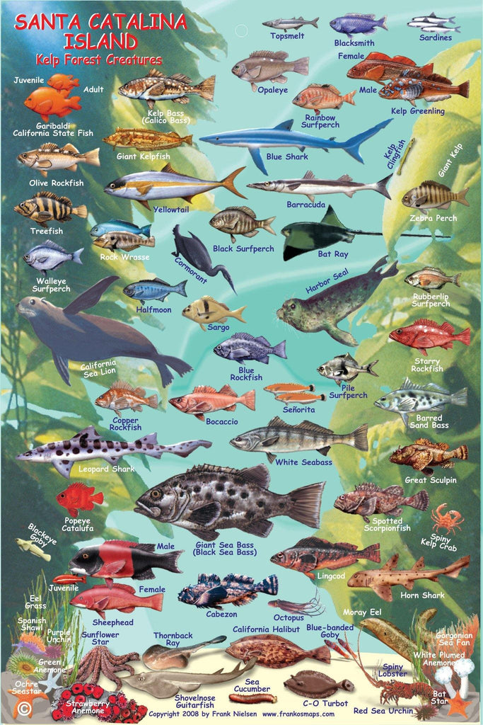 Two Harbors Catalina Fish Card - Frankos Maps