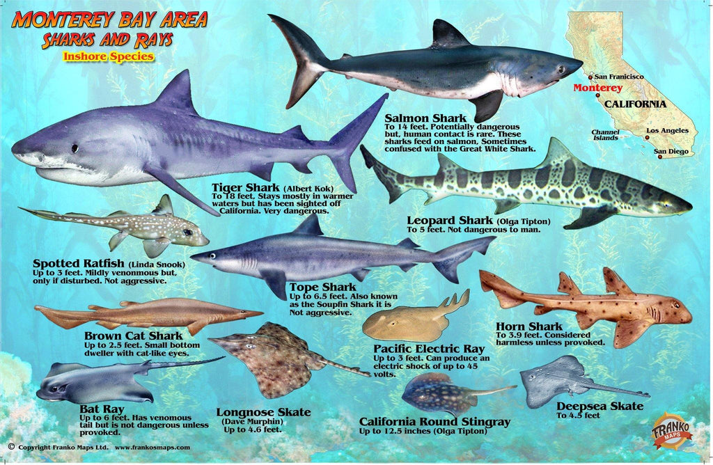 Monterey Sharks & Rays Card - Frankos Maps