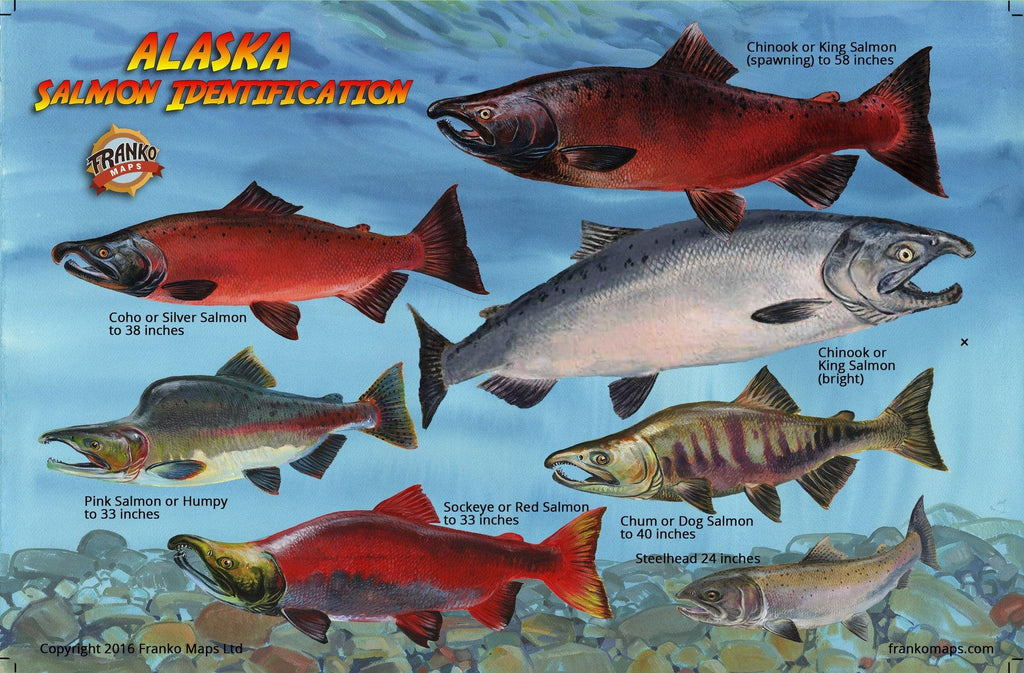 Alaskan salmon identification card by Franko Maps