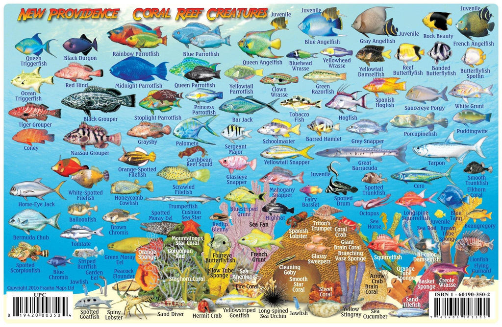 New Providence Island, The Bahamas, Fish Card - Frankos Maps