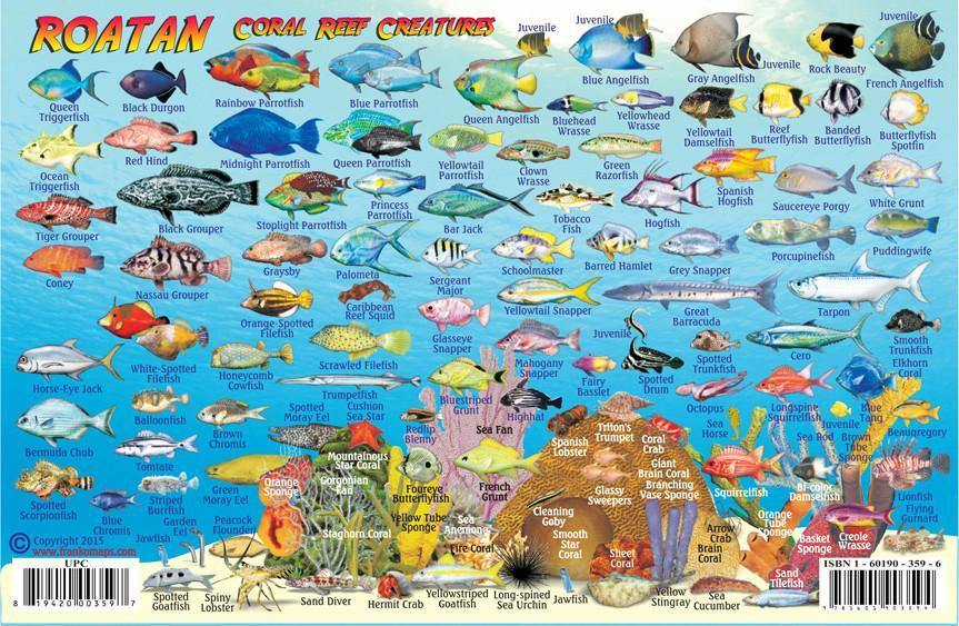 Roatan Fish Card - Frankos Maps