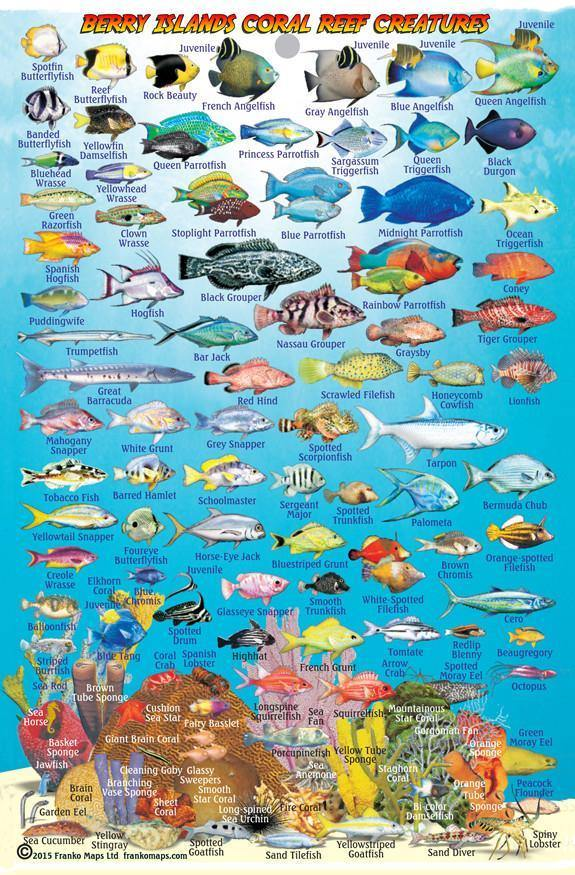 Berry Islands, The Bahamas, Fish Card - Frankos Maps