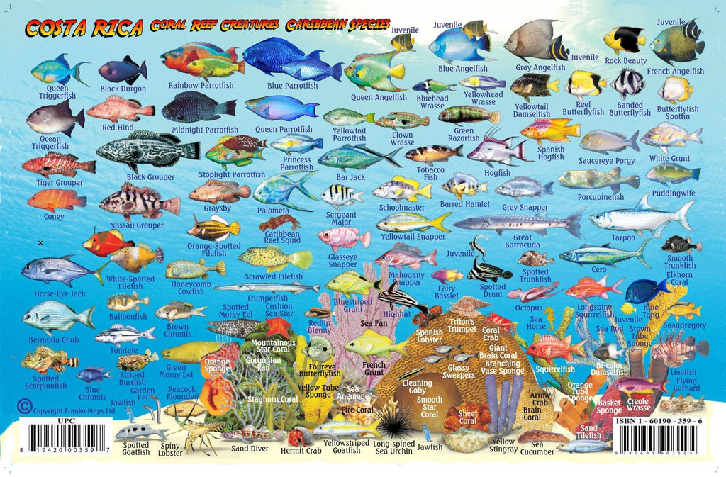 Costa Rica Caribbean Fish Card - Frankos Maps