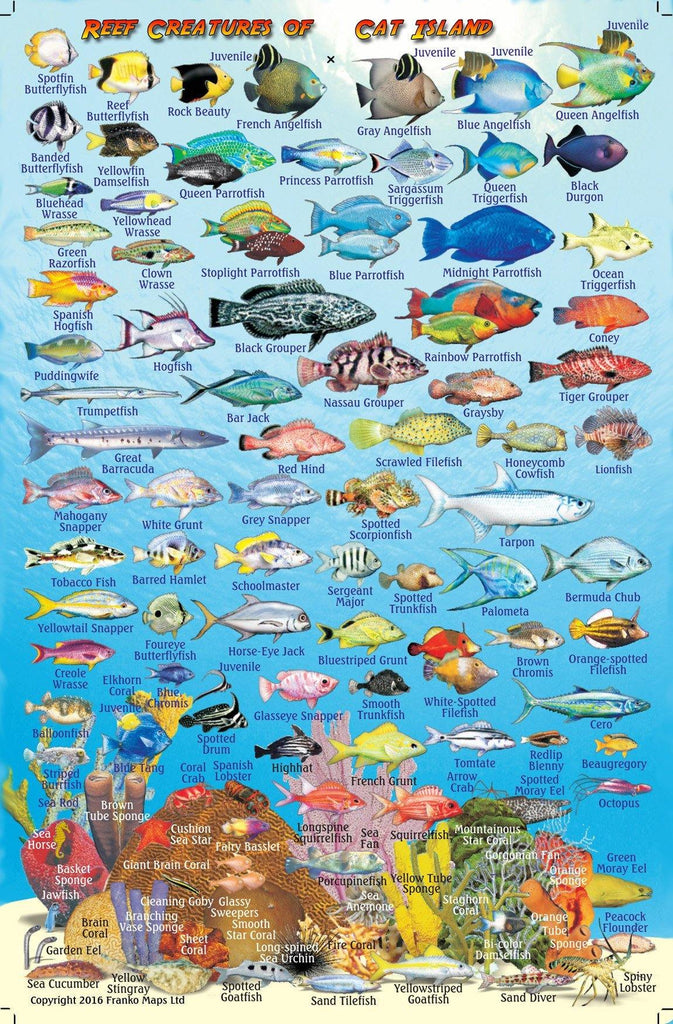 Cat Island, The Bahamas, Fish Card - Frankos Maps