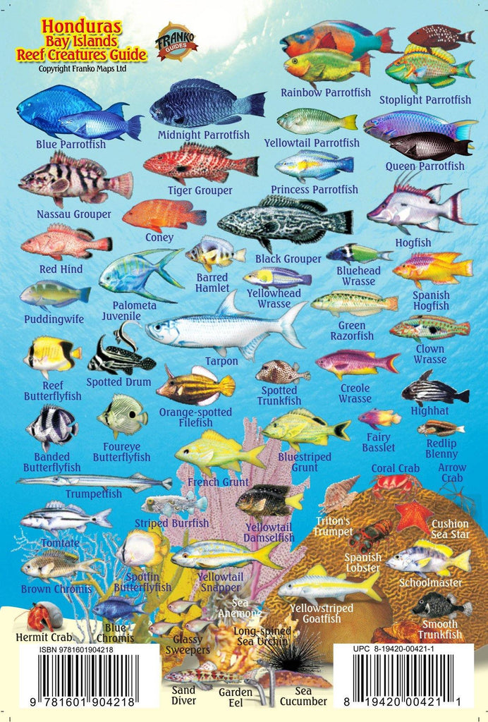 Honduras Bay Islands Mini Fish Card - Frankos Maps