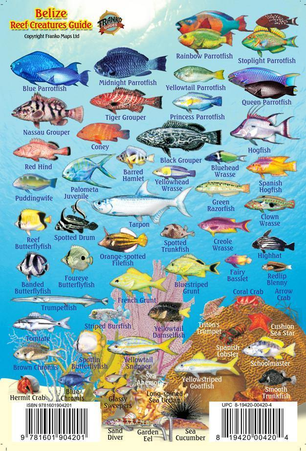 Belize Mini Fish Card - Frankos Maps