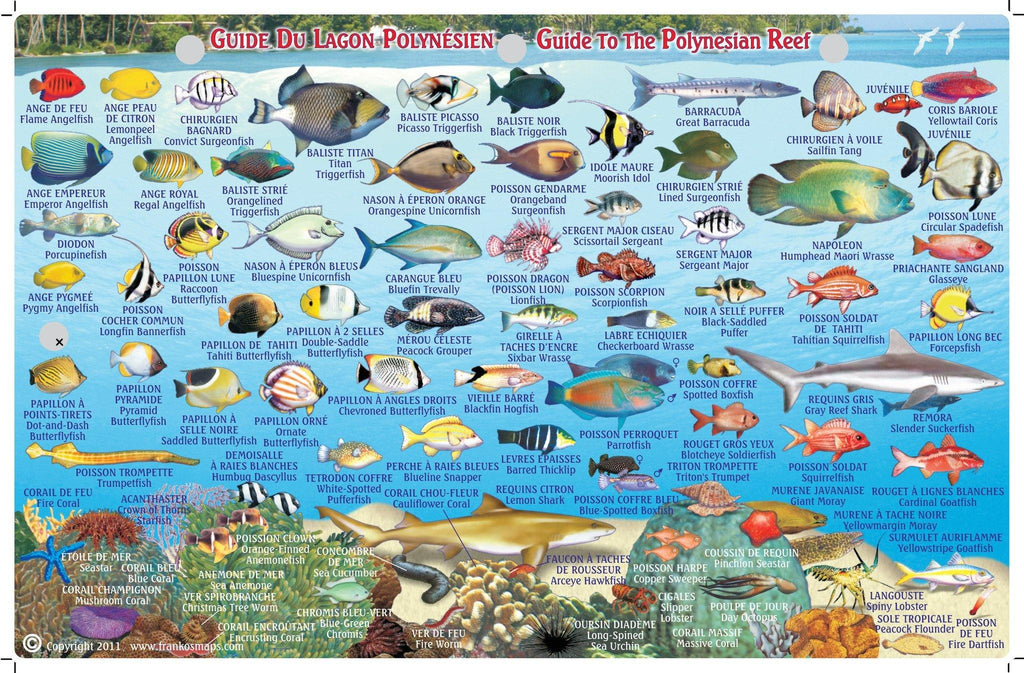 Tahiti & Society Islands Fish Card - Frankos Maps