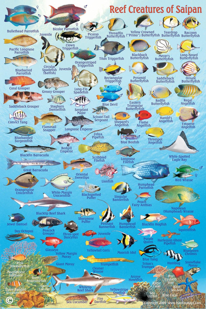 Saipan Fish Card - Frankos Maps