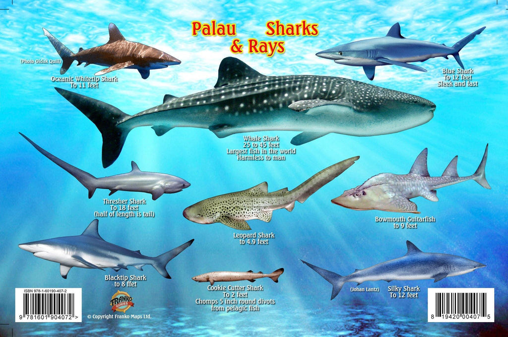 Palau Sharks & Rays Card - Frankos Maps