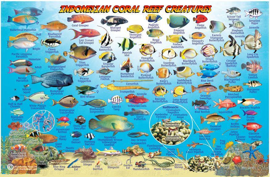 Fish Identification from Bali, by Franko Maps