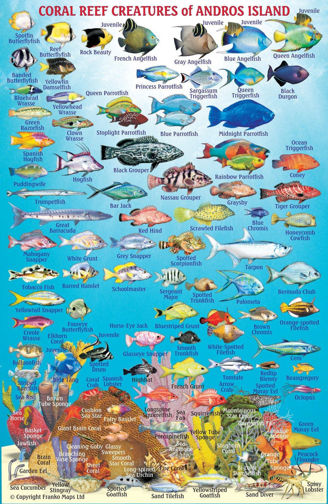 Fish Identification for the Bahamas by Franko Maps