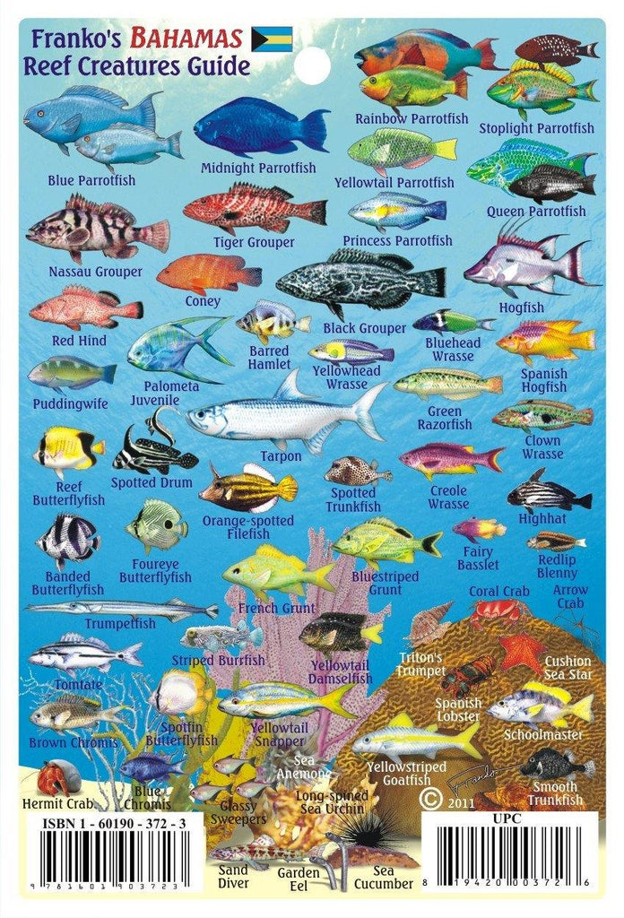 Bahamas Mini Fish Card - Frankos Maps