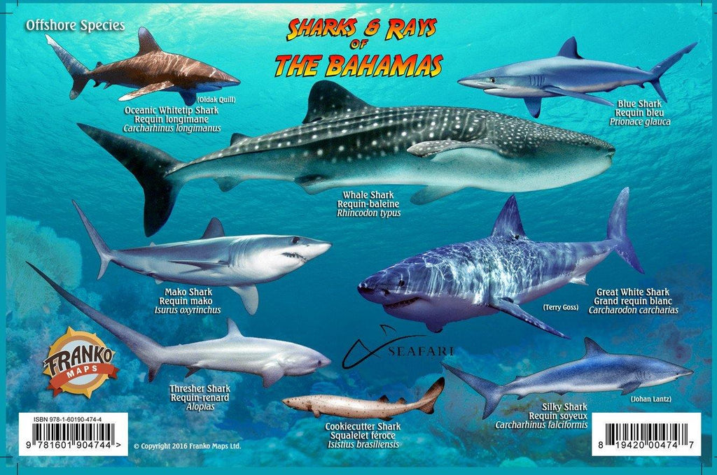 Bahamas Sharks & Rays Card - Frankos Maps