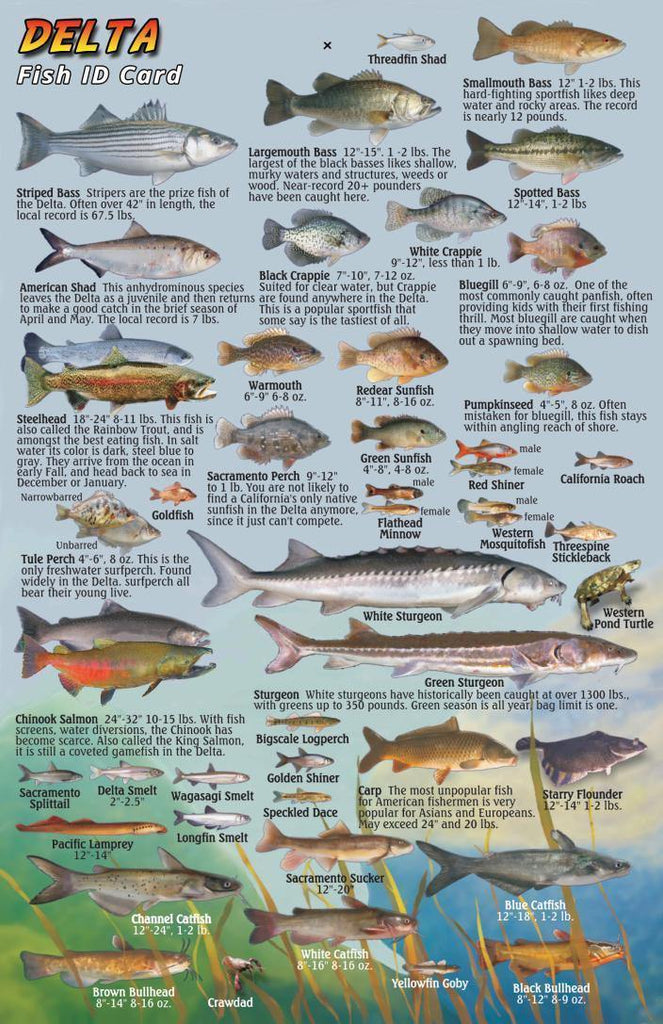 California Delta Fish Card - Frankos Maps