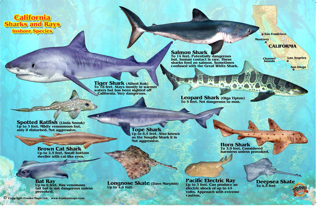 California Sharks & Rays Card - Frankos Maps
