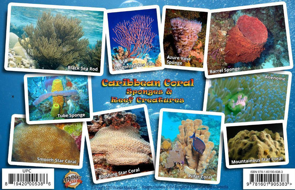 Caribbean Sea Coral Guide Card - Frankos Maps