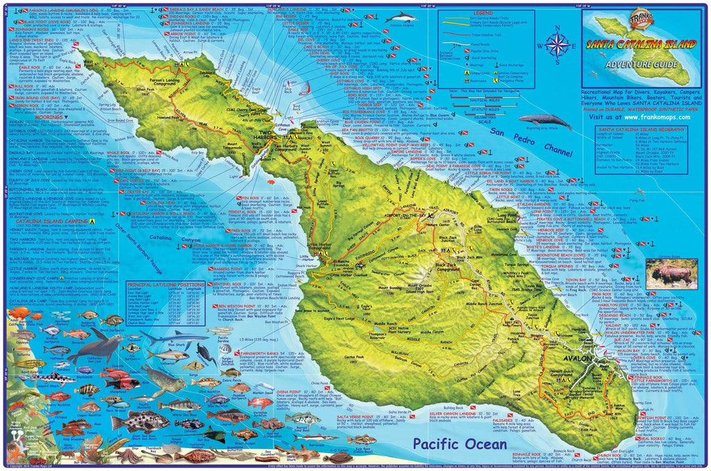 Santa Catalina Island Dive & Adventure Map Poster - Frankos Maps