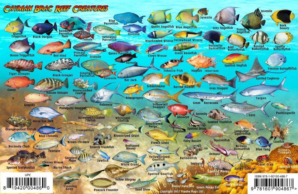 Cayman Brac Island Fish Card - Frankos Maps