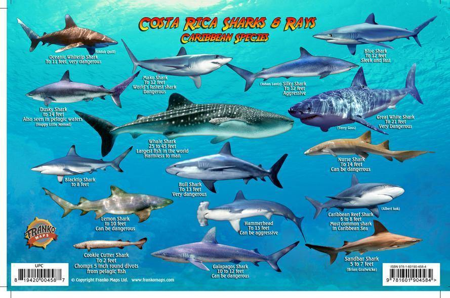 Costa Rica Sharks & Rays Card - Frankos Maps