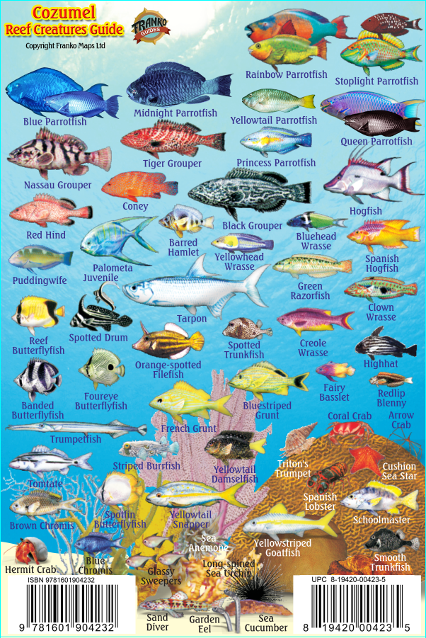 Cozumel Mini Fish Card - Frankos Maps