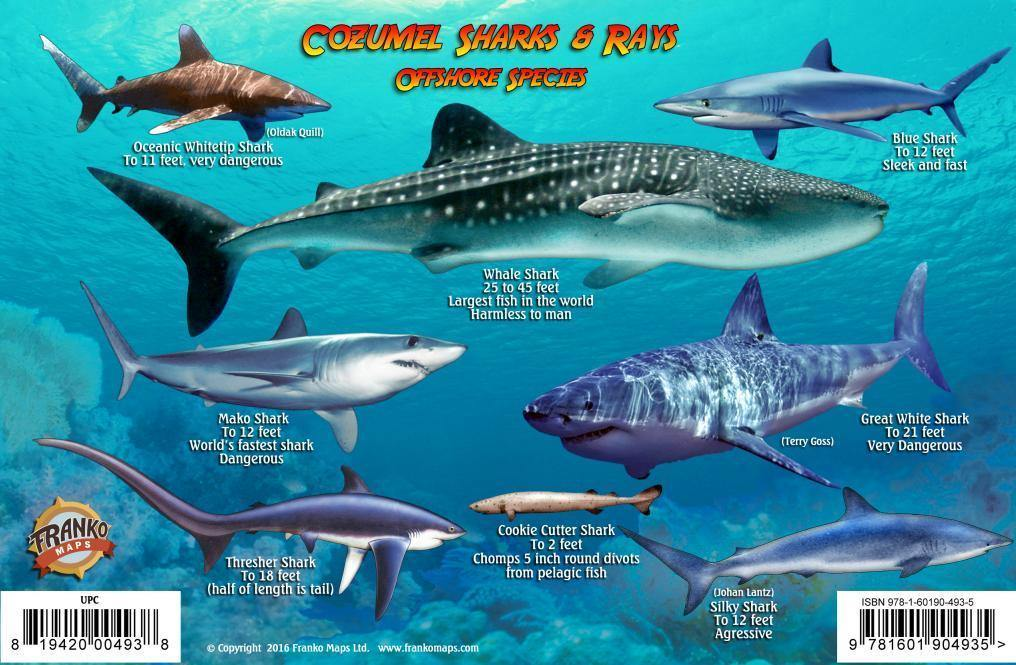Cozumel Sharks & Rays Card - Frankos Maps