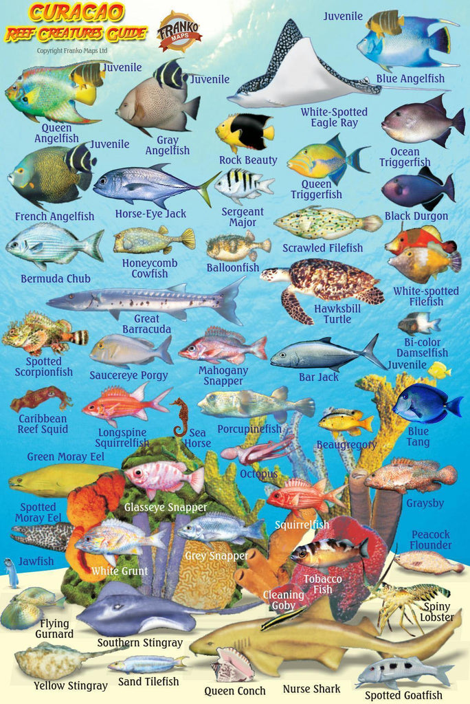 Curacao Mini Fish Card - Frankos Maps