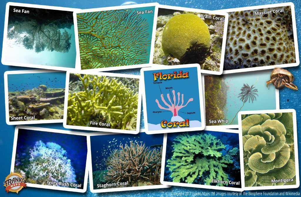 Florida Coral Guide Card - Frankos Maps