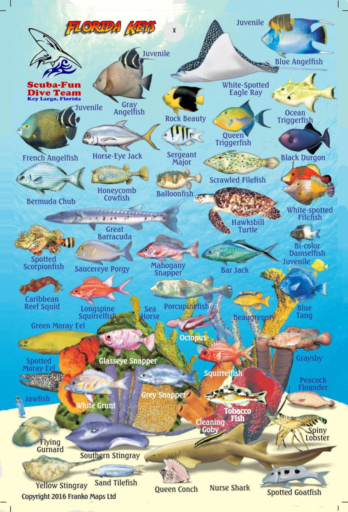 Florida Keys Mini Fish Card - Frankos Maps
