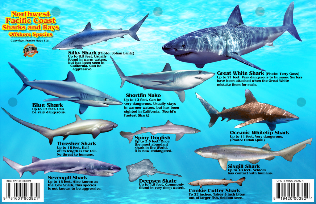 Pacific Northwest Sharks & Rays Card - Frankos Maps